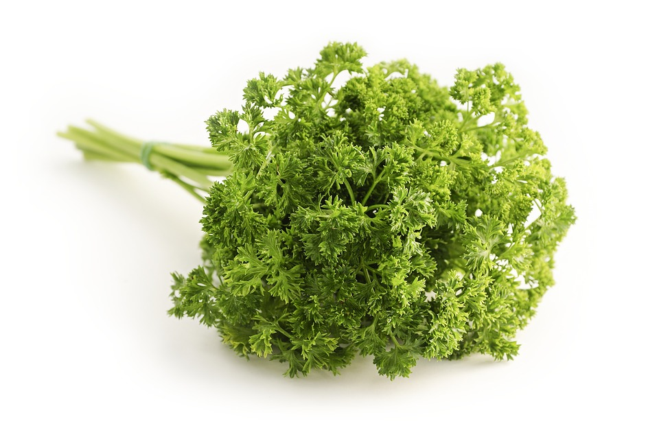 parsley curled petroselinum crispum hossein peterle